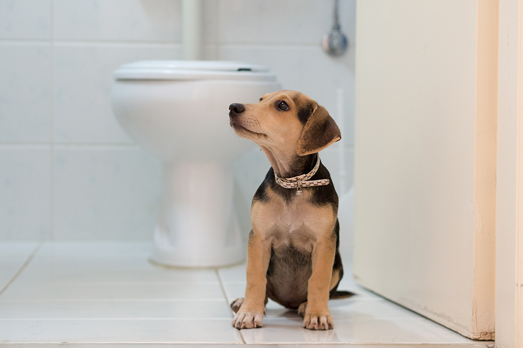 Let Them Chew On Carpets >> How to Pet Proof your Rental or Home - Ashford Realty Group