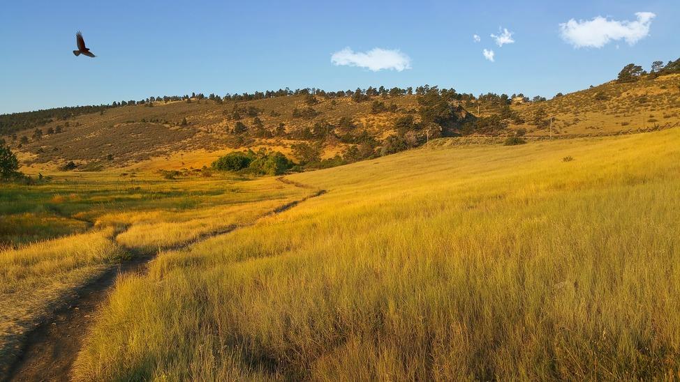 pineridge-natural-area-1596273_1920
