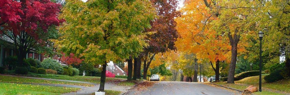 101027_trees-street_fall-2010_b_001