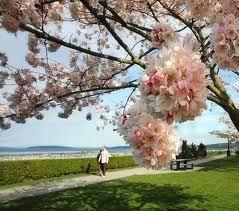 Beverly Park - Everett