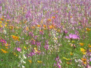 wild-flowers-300x224