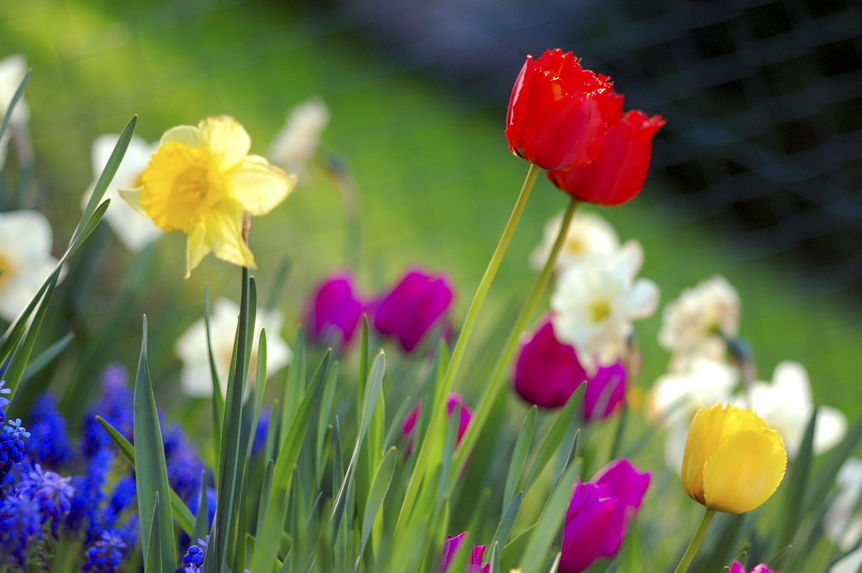 Farmington Hills Sping Real Estate Market Flowers