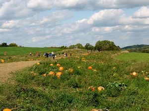 pumpkin-patch-view