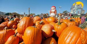 header-pumpkinland1-907x460