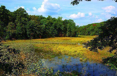 By: U.S. Fish and Wildlife Service Northeast Region