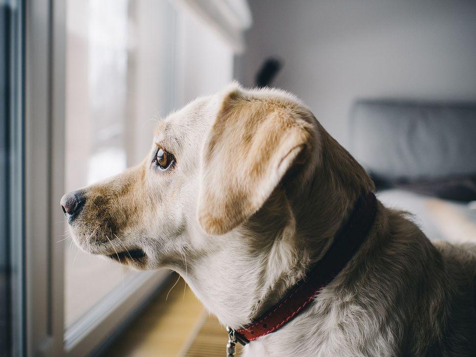dog-926220_1280