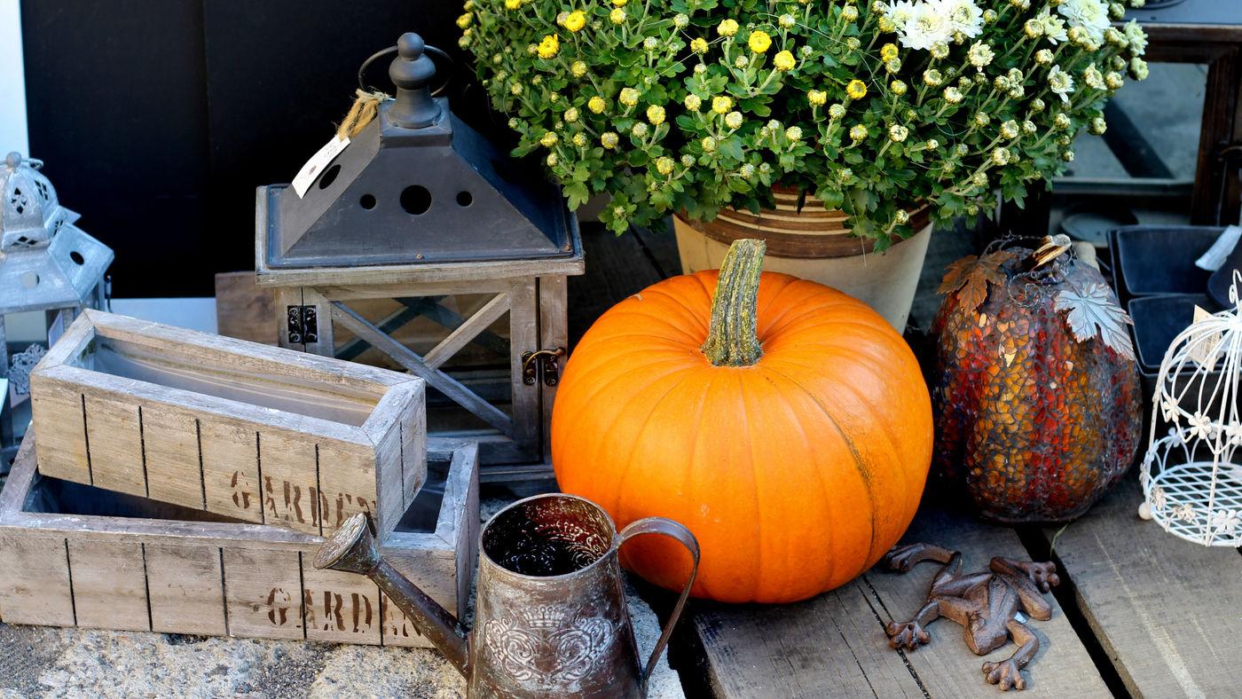 shutterstock_156380780-fall-blog