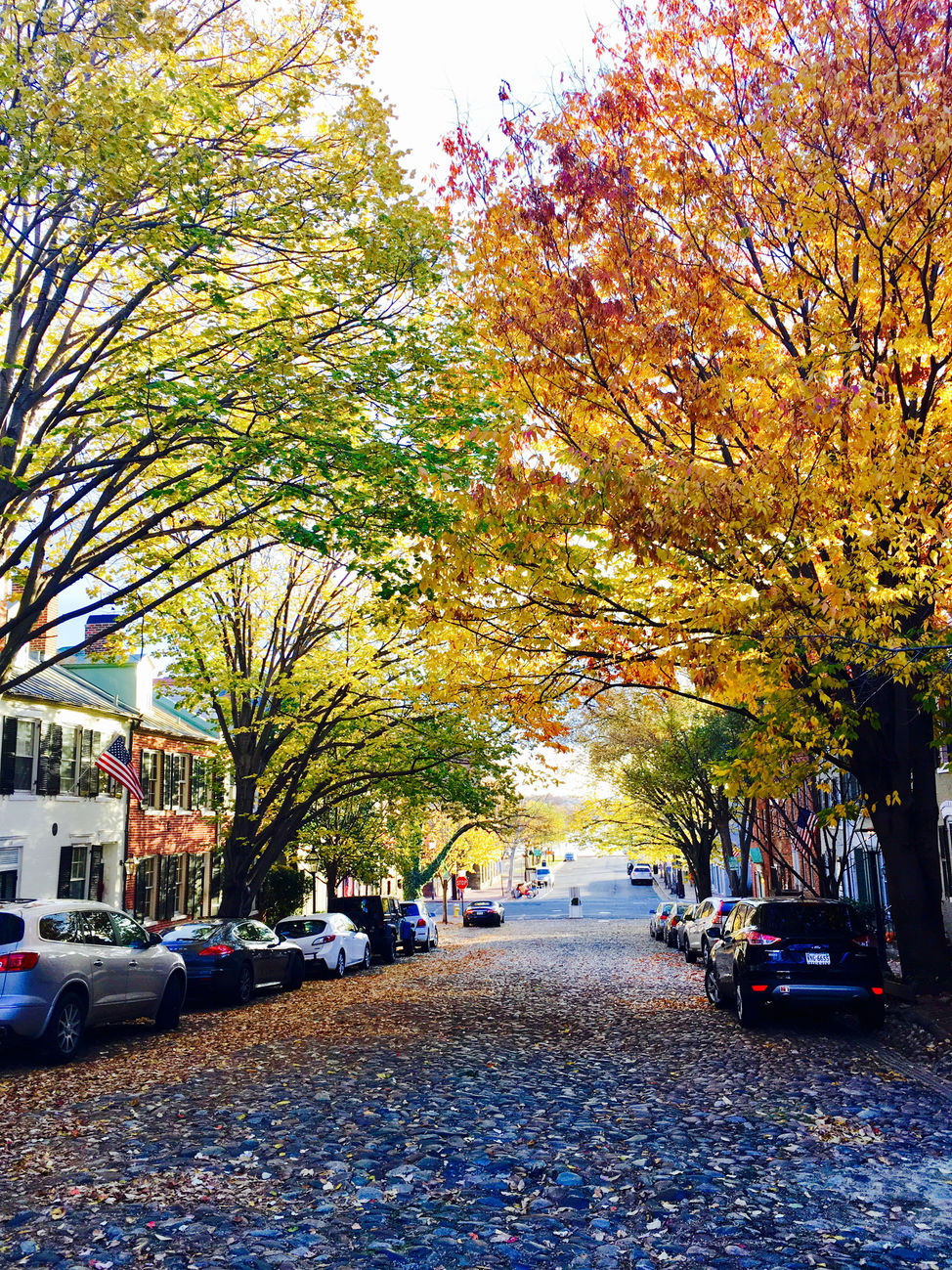 Old Town wears Fall well