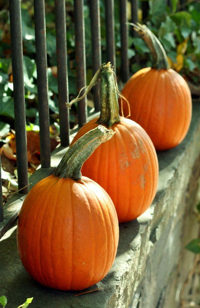 georgetown-pumpkins