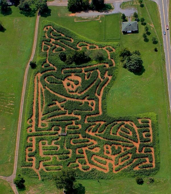Fall Corn Maze in The Plains