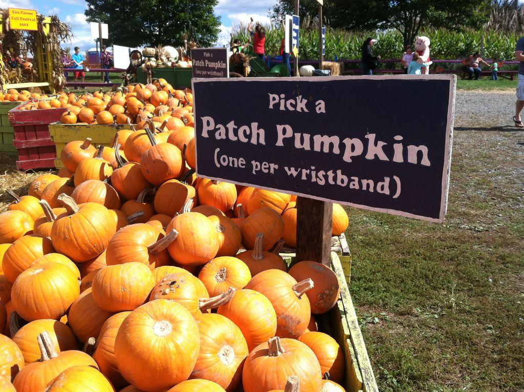Celebrate fall at Cox Farms