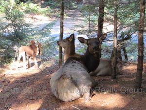 62618-elk-trail-way-e-enumclaw-98022-9
