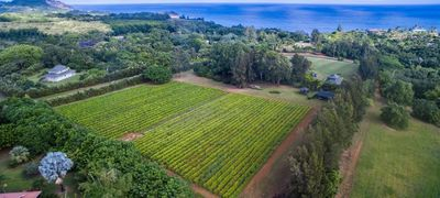 SOLD: 4235 N. Waiakalua Rd, Kilauea ($1,600,000)