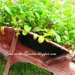 wheelbarrow gardening