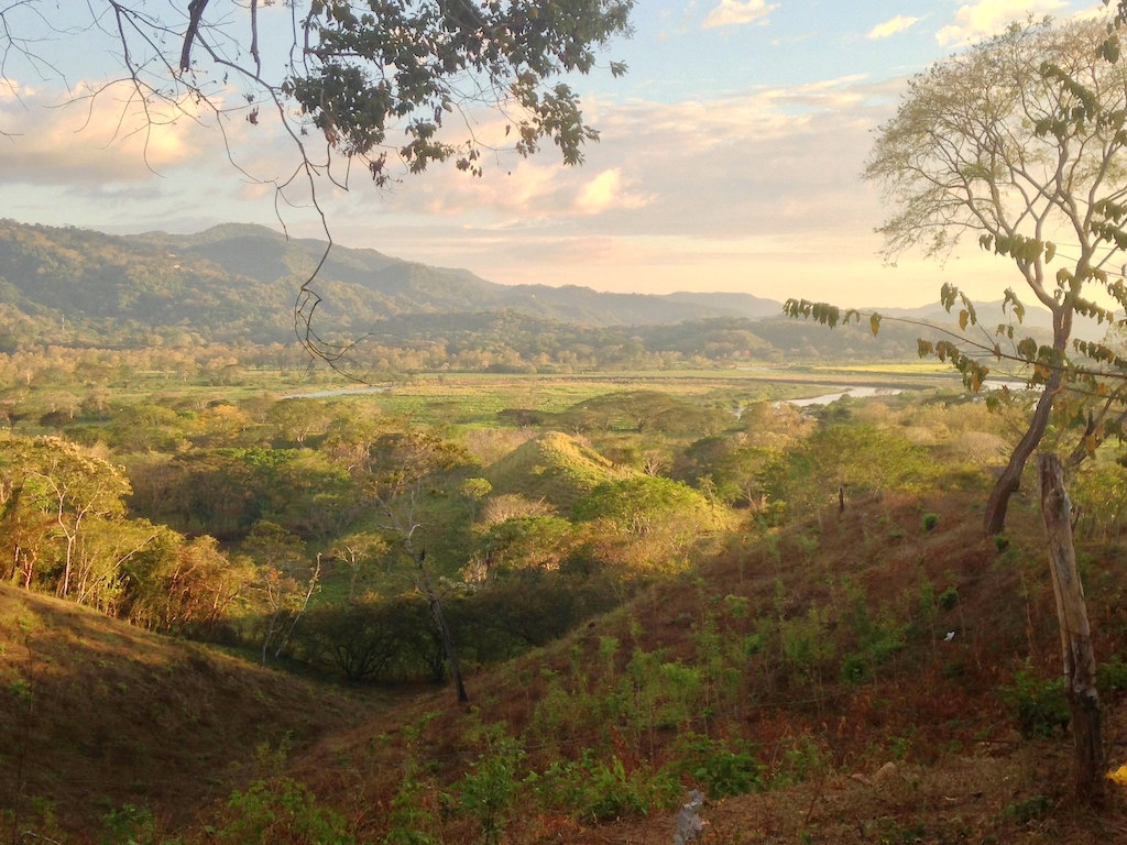 Guanacaste gold
