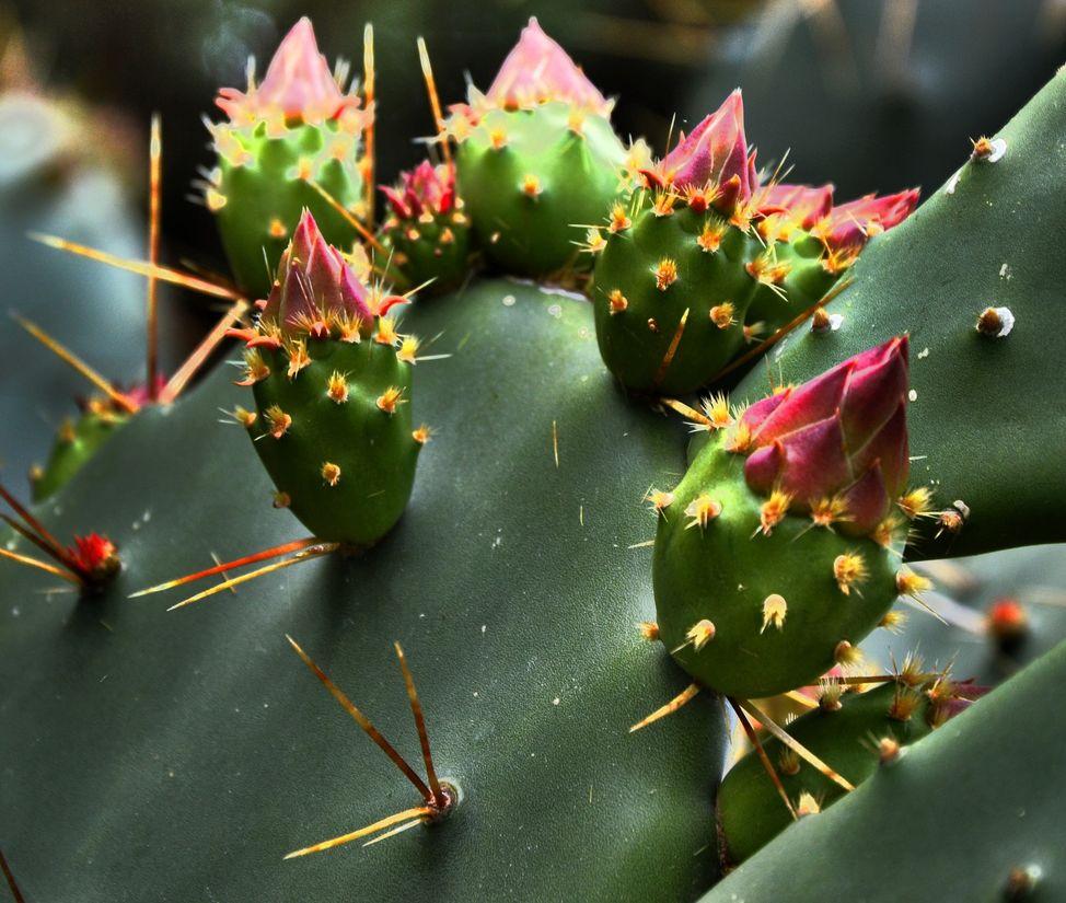 cactus-after-rain-12