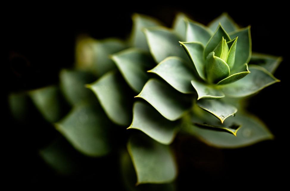 cactus-after-rain-5