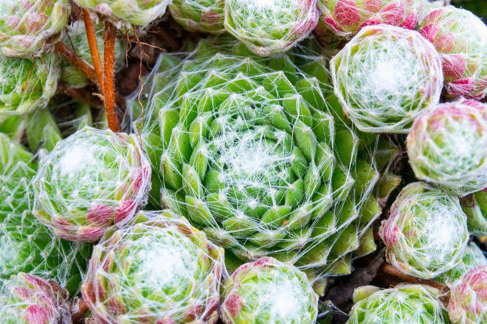 cactus-after-rain-6