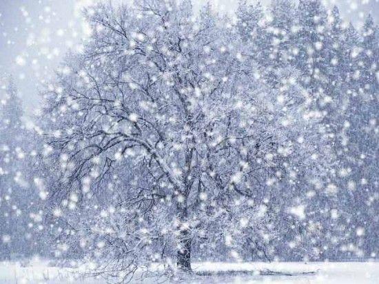 snowfall_1-e1355333227687