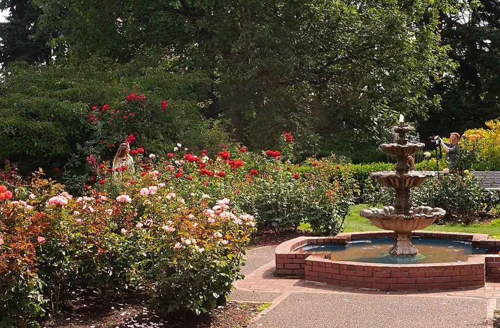 Portland Rose Gardens