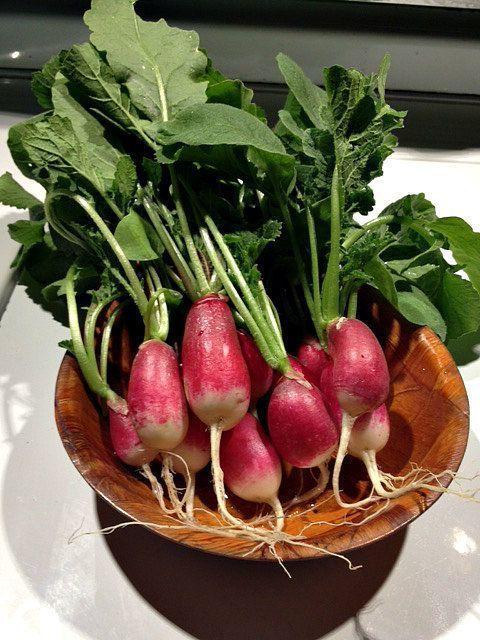 radish in bowls