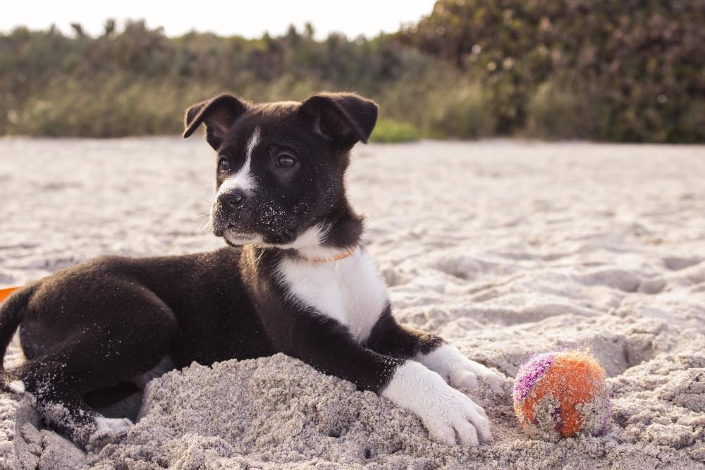Dog Friendly Places In Long Beach