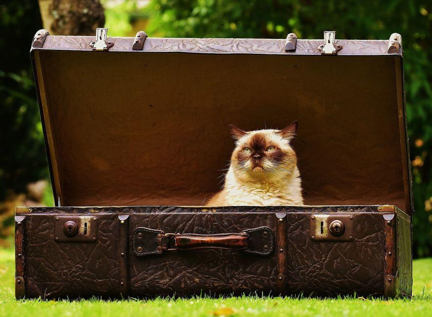 Moving Cat