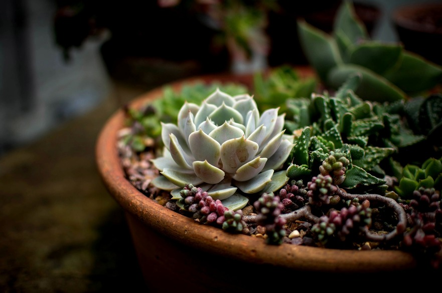 Container Gardens Add Pop to Patios