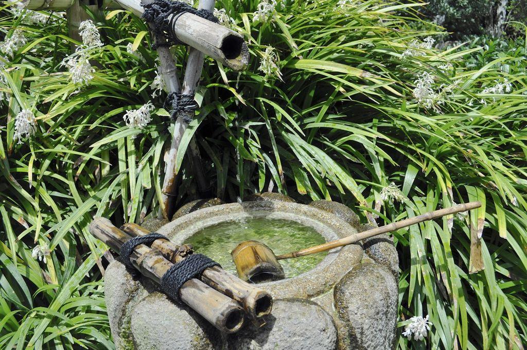 Explore earl burns miller japanese garden for Csulb japanese garden koi pond