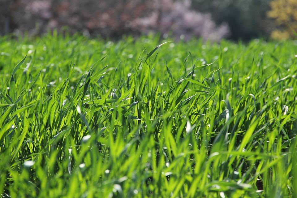 grass-3269760_960_720
