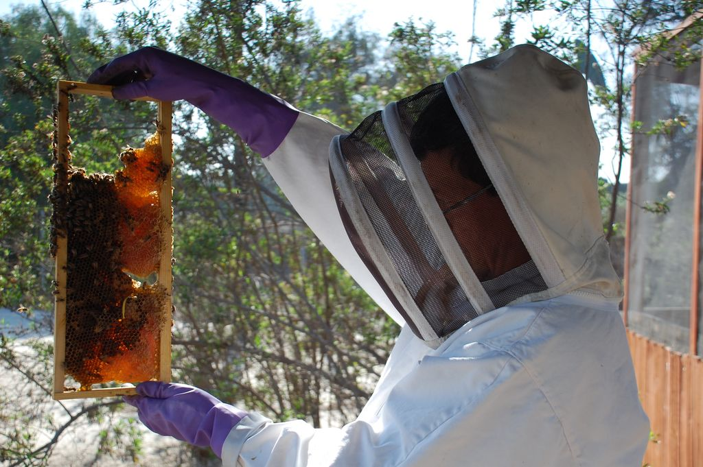long-beach-beekeepers-4