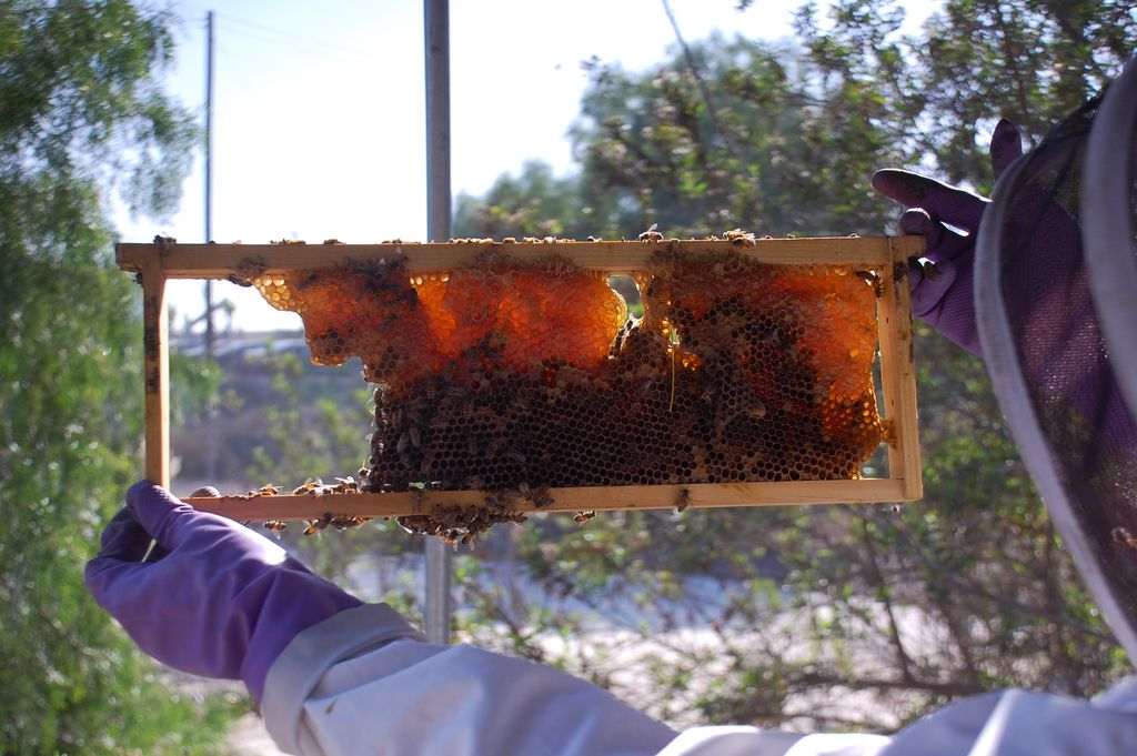 long-beach-beekeepers-5