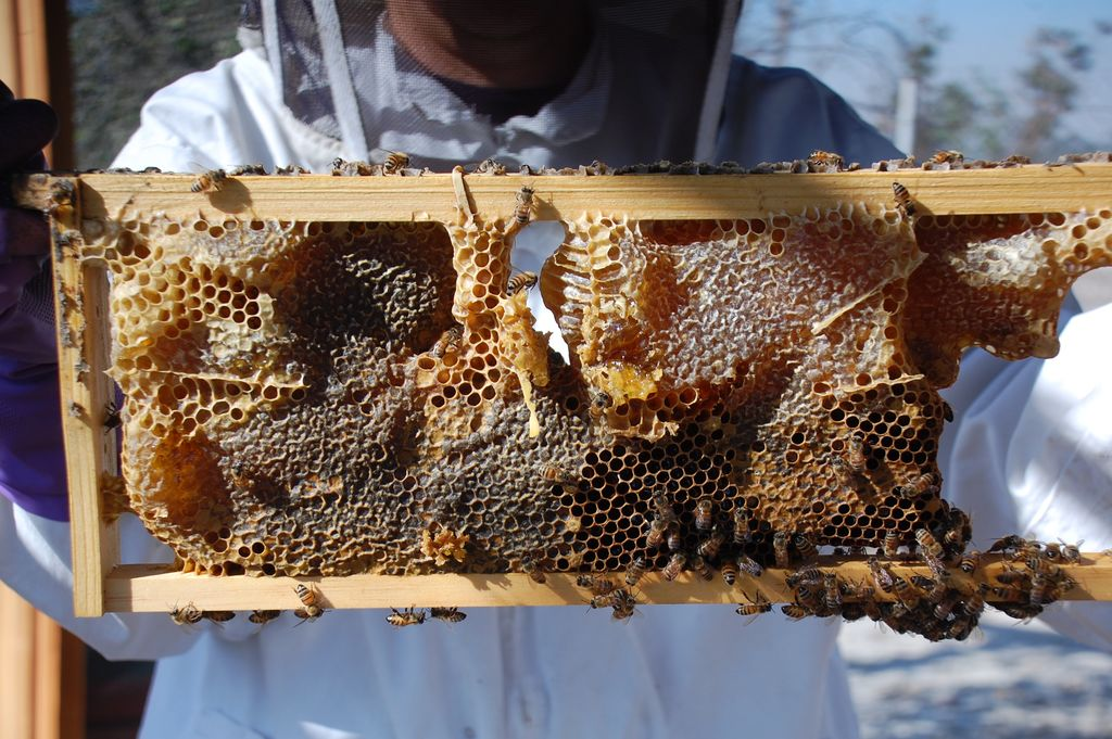 long-beach-beekeepers-6