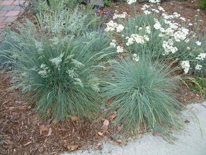 Long Beach Lawn to Garden