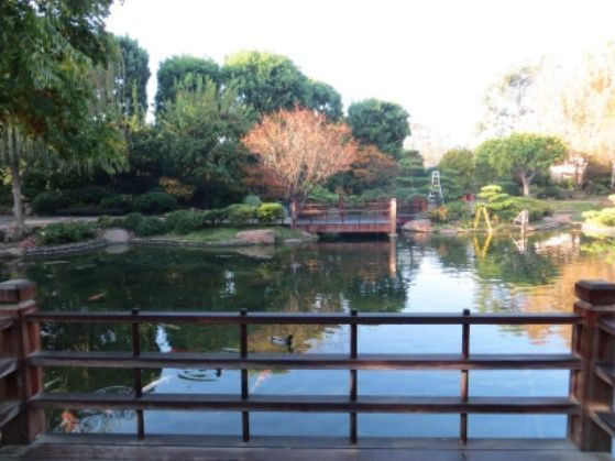 koi pond at japanese gardens