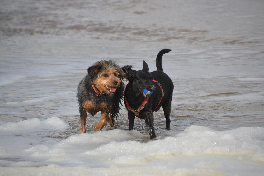 dogs-on-the-beach-962409-1