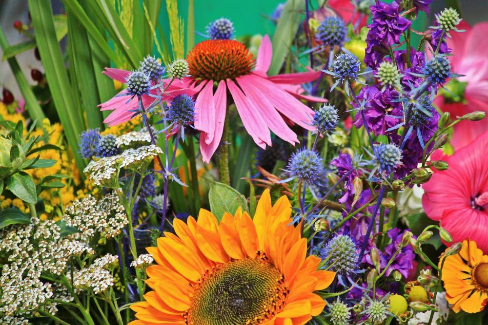 flowers-910846_1920