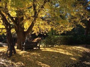 descanso-gardens-300x225