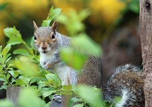 squirrel-1401508_640