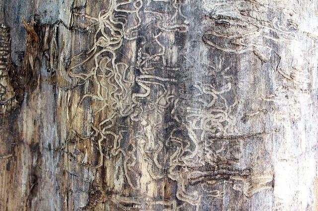 termite-71313_640