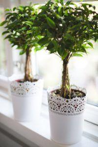 plants-768717_1920-200x300