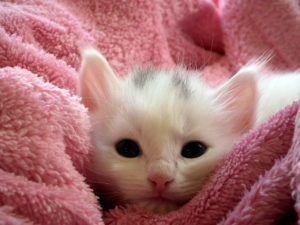 kitten-227009_1280-300x225