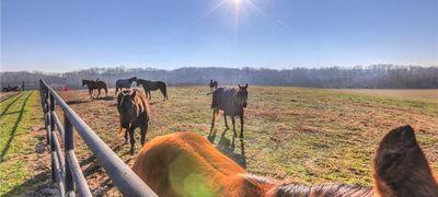 Williamson County Farms