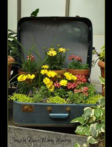nanas-making-memories-suitcase-planter