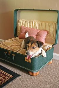 suitcase-to-dog-bed-cappers-farm