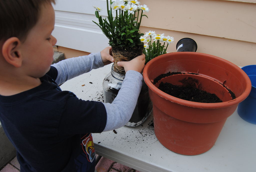 add-daisies-easy-gardening-with-kids