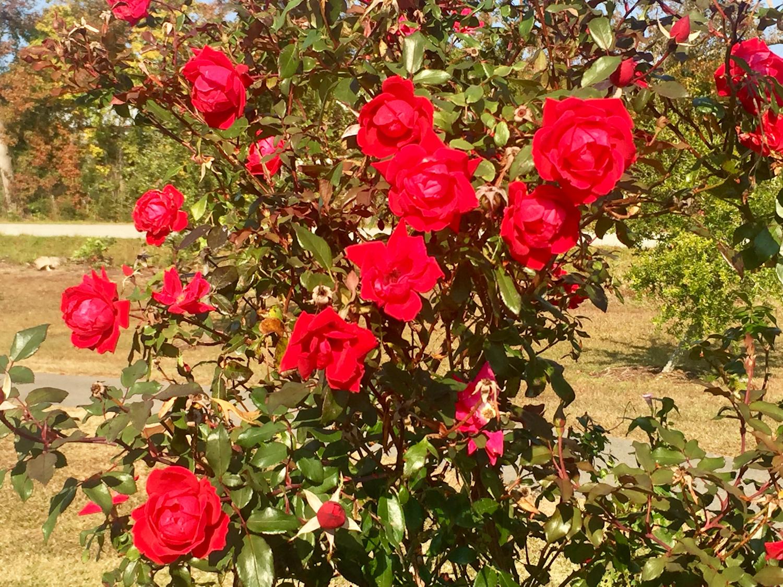 kiwanis-park-flowers-2-sm