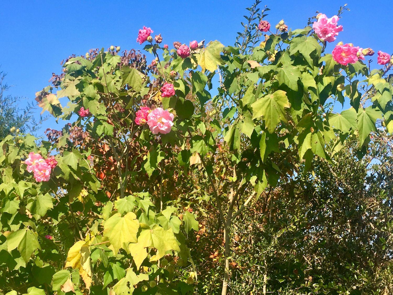 kiwanis-park-flowers-sm