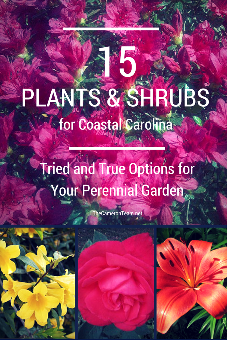 15 Plants and Shrubs for Coastal Carolina