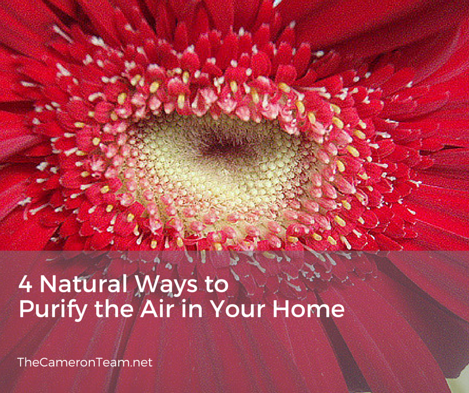 4 Natural Ways to Purify the Air in Your Home